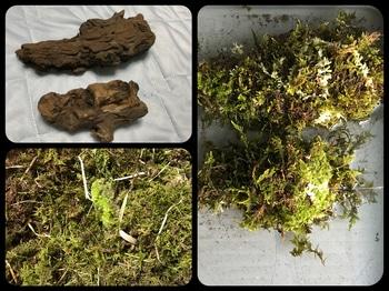 マナハウスのビオトープ♪( ´▽`) 流木と苔!♪( ´▽`)