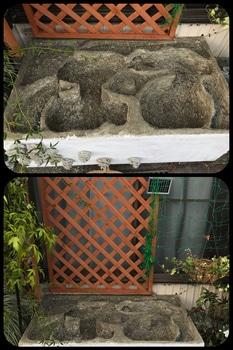 マナハウスのビオトープ♪( ´▽`) 庭に置きました♪( ´▽`)