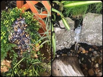 マナハウスのビオトープ♪( ´▽`) 滝と水流確認♪( ´▽`)