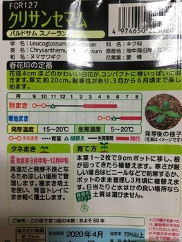 ノースポールはじめて栽培 種まきから挑戦 種蒔き 2019/09/11