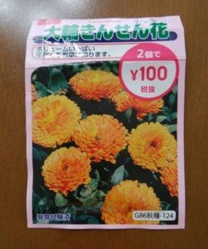 ✔ ダイソーの大輪きんせん花を種から育てる 2019/9/16 種まき