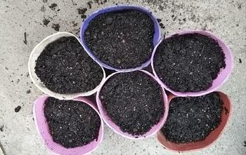 秋きゅうり~種子から! ポット苗作り