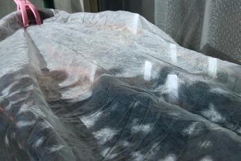 ばらの種まき 不織布