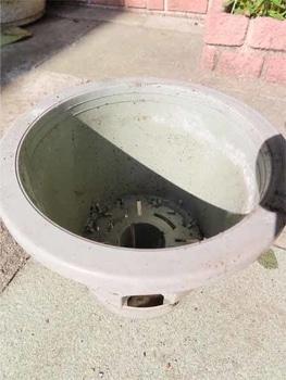 鉢植えシクラメンの植え替え 新しい鉢