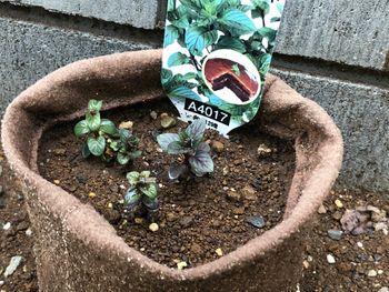 ミント2種挿し木 新芽から順調に