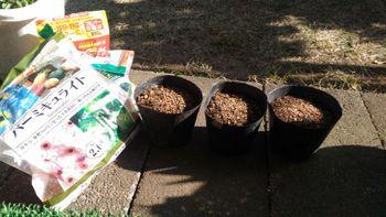 かすみ草をポットに直まきで育てる 3月26日 種まき
