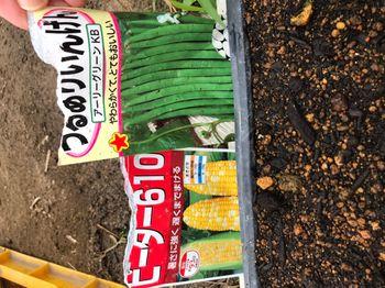 家族が育てる枝豆を勝手に観察してみよう どれどれ、どんな種を買ってきたのかな?