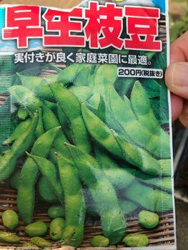 家族が育てる枝豆を勝手に観察してみよう