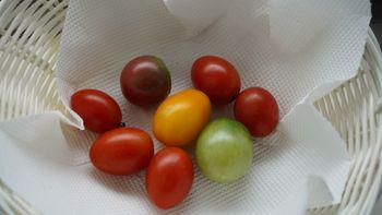4色のミニトマトで畑デビュー 収穫もしました