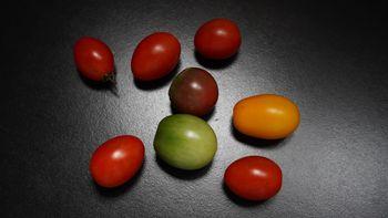 4色のミニトマトで畑デビュー トップ画像に似せて撮影