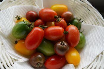 4色のミニトマトで畑デビュー たくさん収穫できました