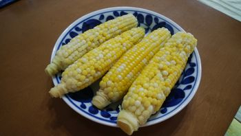 ✔ ダイソー ごく甘バイカラーコーンを種から育てる 2020/8/10 残りを収穫