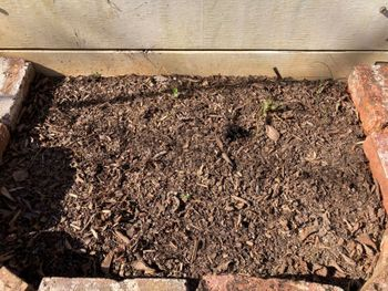 2021年の開花を目指してルピナスを種から育てます 3/20/2021