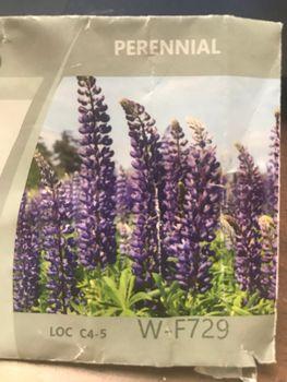 2021年の開花を目指してルピナスを種から育てます