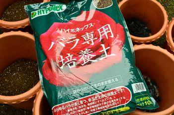 一般的なオリエンタルゆりの植え替え ハイポネックスバラ培養土