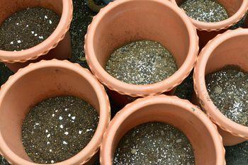 一般的なオリエンタルゆりの植え替え 鉢土の準備