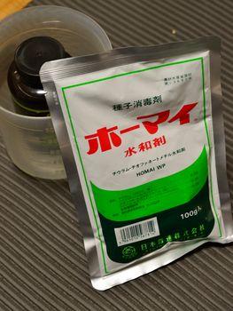 一般的なオリエンタルゆりの植え替え ホーマイ水和剤