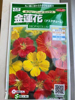 食べられる花 ナスターチウムを育てる!