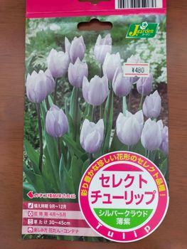 チューリップの花色が変わったと思ったら『モザイク病』でした! 2018年秋に購入しました