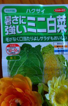 ミニ白菜♪タイニーシュシュ春撒き2021【終了】