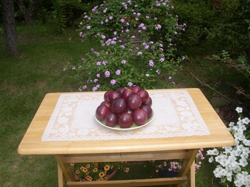 パッションフルーツの緑のカーテン 10月 収穫したパッションフルーツの果実