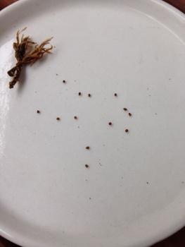 続々・サボテン栽培 種