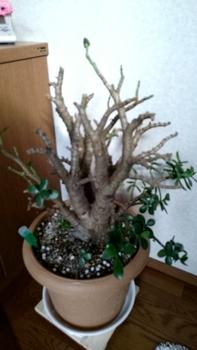 なる 植え 木 の 替え かね