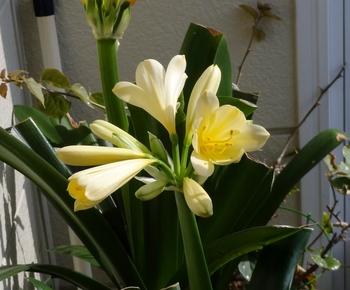我が家の玄関に春が来た 花数が少ない