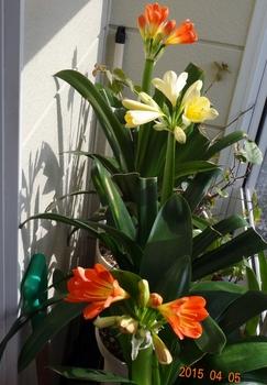 我が家の玄関に春が来た