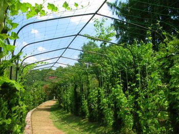 みどりの体感ドーム育苗中 緑のトンネル