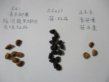 変化朝顔の栽培記録