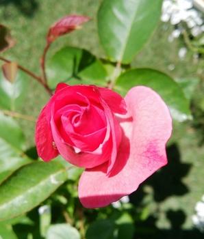 どんなお花が咲くかお楽しみに(*^^*) 6月3日咲いて来ましたよ~💗