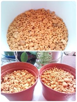 どんなお花が咲くかお楽しみに(*^^*) 同日   鉢3鉢に撒きました