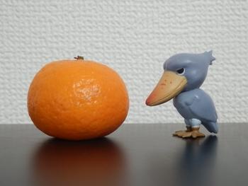 柑橘類の種まき