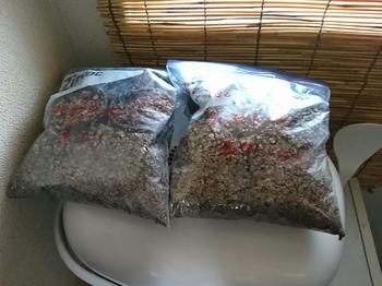 タビビトノキを種から 袋蒔き