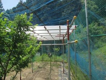 ブドウ栽培リベンジです。 ポリカーボネート波板に