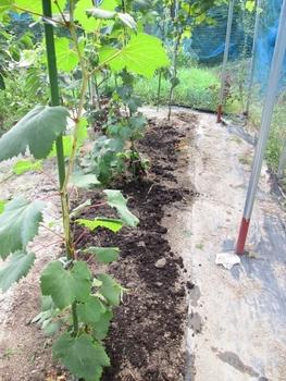 ブドウ栽培リベンジです。 ブドウ畑の改良