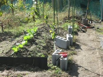 ブドウ栽培リベンジです。 ブドウ棚作成