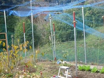 ブドウ栽培リベンジです。 支柱造り完成