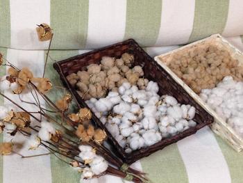 棉から綿へ