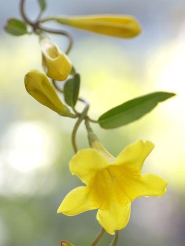 教会の花壇に花を植えており、結構人通りの多い道で、花を楽しみ...