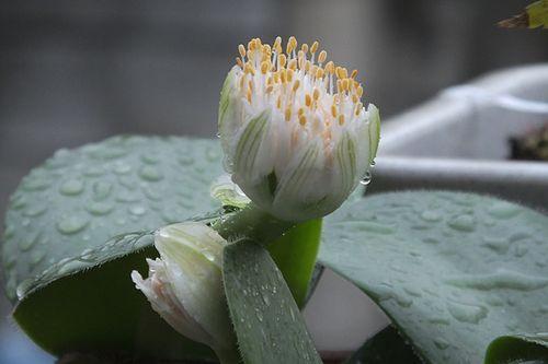 多肉植物だと思いますが、花の名前と植物の名前がわかりません。...