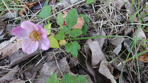 散歩道に咲いてました とても可憐な花に魅了しました 植物の名...