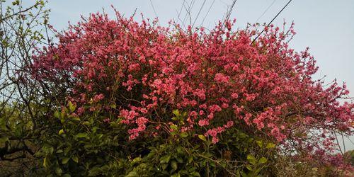 散歩の途中で見つけた花の写真をいただきましたが見たことありま...