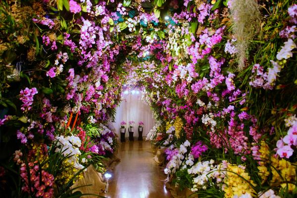 コチョウラン(胡蝶蘭)の写真 by わいわい&ロビー 欄のトンネル(ハウステンボス)