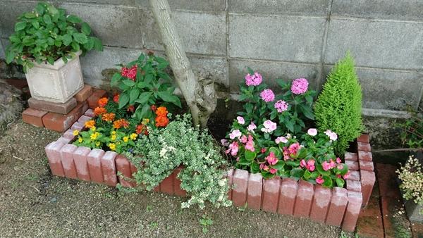 お庭の花壇を模様替え ペンタス 日々草 ベゴニア マリーゴールド 元気になるように