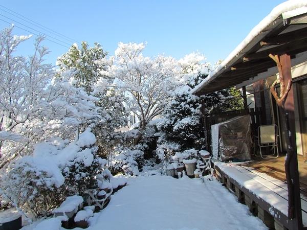 1月の雪が降った時の庭の風景です。庭木の樹氷です。