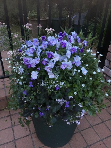 紫の小花を集めました。  ビオラ、かすみ草、ネモフィラ、ライスクラッカー スミレ他