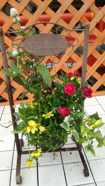 赤いミニ薔薇、黄色のコレオプシス、アイビー、白い千日紅を使い、玄関先にちょこっと置ける