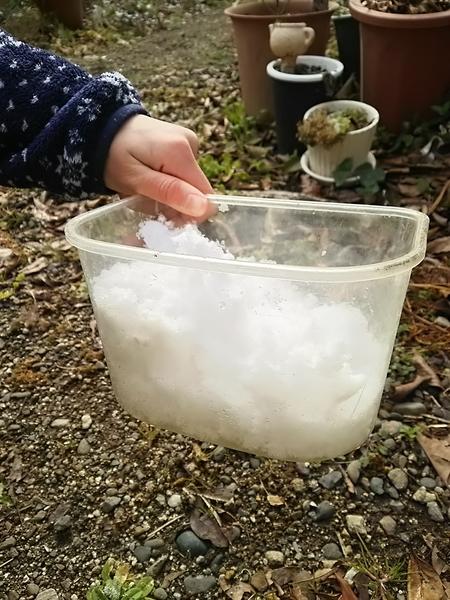また雪がうっすら積もってました😃 娘のミニマンゴーが雪を集めていました。 また、雪